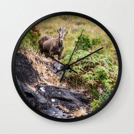 Nilgiri Tahr mountain goat Wall Clock