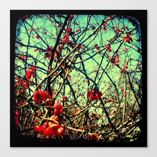 Blossom Frenzy - Through The Viewfinder (TTV) Canvas Print