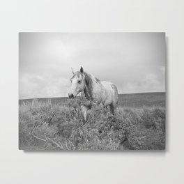 Stormy Walk Horse Photograph Metal Print