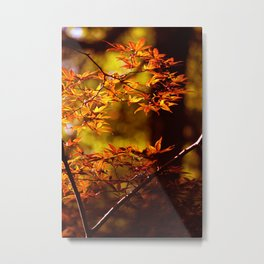 Japanese Momiji Maple Leaves in Fall Photography Metal Print