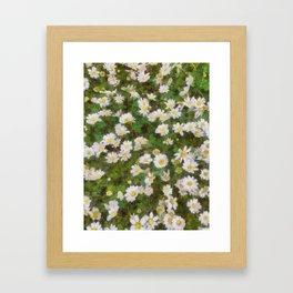 Daisies In Spring Framed Art Print