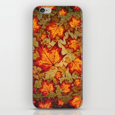Changing Of The Seasons iPhone & iPod Skin