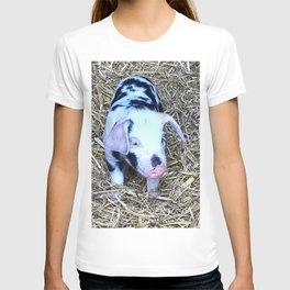 next cute Piglet T-shirt
