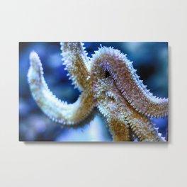 Starfish / Sea star (Close up) Metal Print
