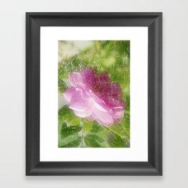 Pinky Rose Framed Art Print