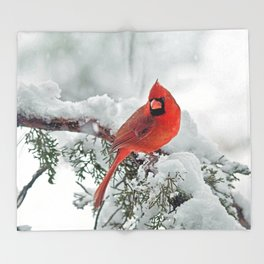 Cardinal on Snowy Branch (sq) Throw Blanket