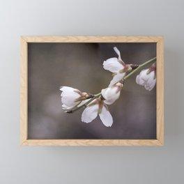 spring cherry blooms Framed Mini Art Print