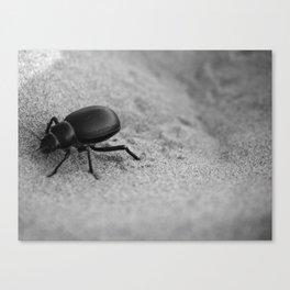 Desert Beetle Canvas Print