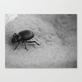 Desert Beetle Canvas Print