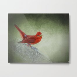 Song of the Summer Tanager 4 - Birds Metal Print