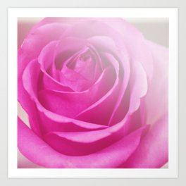 *Pinklight - Rose III Art Print