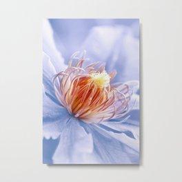 Clematis blue macro 028 Metal Print
