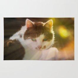 Beautiful cat in autumn sunlight Rug