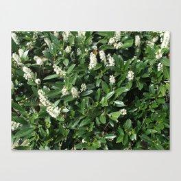green/white Canvas Print