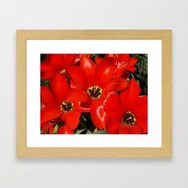 Seductive Red Framed Art Print