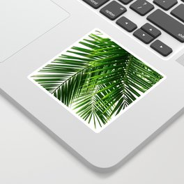 Palm Leaves #3 Sticker