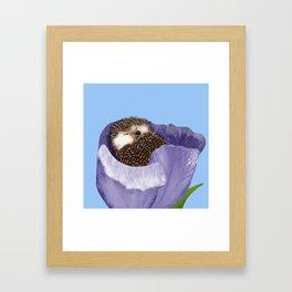 Sleeping Hedgehog In A Purple Tulip / Spring Decor Framed Art Print