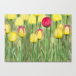 One Red Tulip Canvas Print