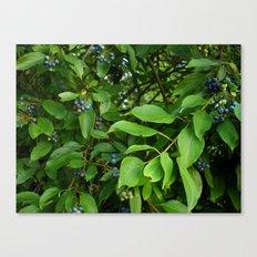 August Blue Canvas Print