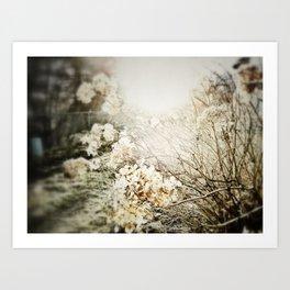 petal light Art Print