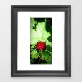Wild Berry Framed Art Print