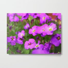 Pink Purple Impatiens Flowers Metal Print