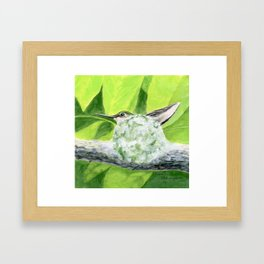 """Mom to be"" acrylic painting of a Ruby-Throated Hummingbird sitting in her nest by Teresa Thompson Framed Art Print"