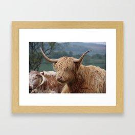 Portrait of Highland Cattle Framed Art Print