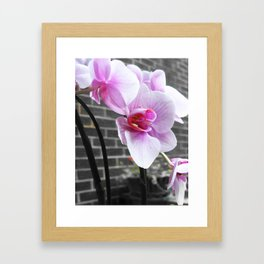 Pink; orchid Framed Art Print