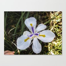 A Bloomed Flower Canvas Print