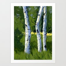 Aspens - Catching the Light Art Print