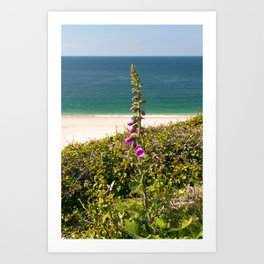 Foxglove On The Beach Art Print