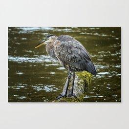 Rainy Day Heron Canvas Print