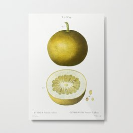 Citrus, Adam's apple, Pomum Adami from Traité des Arbres et Arbustes que l'on cultive en France en p Metal Print