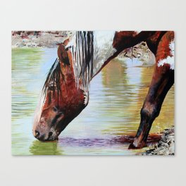 Painted Mustang Canvas Print