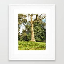 Brighter Days, Warwick, England 2006 Framed Art Print