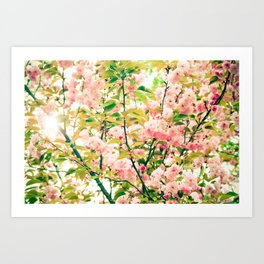 Spring Blossoms (1) Art Print
