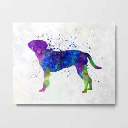Istrian Scenthound in watercolor Metal Print