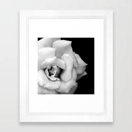 Rose Monochrome Framed Art Print