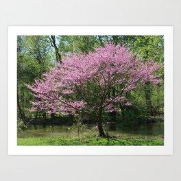 Redbud in Bloom Art Print