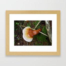 Reishi 4 Framed Art Print