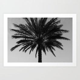Big Black and White Palm Tree Art Print