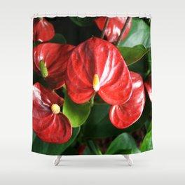 Red Flowers Anthurium Genus Shower Curtain