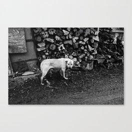 rail thin dog Canvas Print