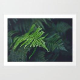 fairy fern Art Print