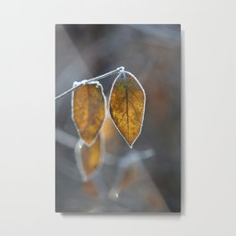 Mustard Yellow and Brown Fall Leaves on Gray Metal Print