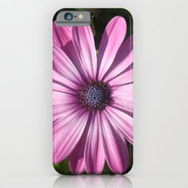Spectacular African Daisy iPhone Case