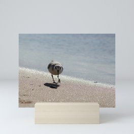 Sandpiper bird on the seashore Mini Art Print