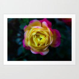 Foggy Rainbow Rose Art Print