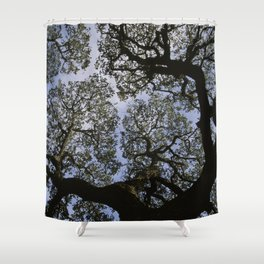 Oak Tree Reaching For The Sky Shower Curtain